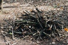 Houten opent het bos het programma, in een stapel in Dolomiet wordt gestapeld dat Vers gehakte die boomlogboeken omhoog op bovenk stock afbeeldingen