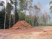 Houten opslag in bos Stock Fotografie