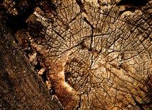 Houten oude textuur Stock Foto