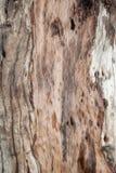 Houten oude textuurachtergrond Stock Foto
