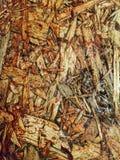 Houten paneel Stock Foto's