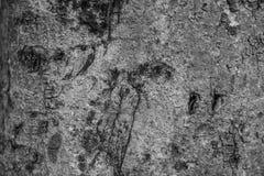 Houten patroon voor achtergrond en textuur in zwart-wit Stock Foto