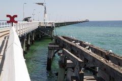Houten pier met zeemeeuwroekenkolonie op verlaten structuur stock foto