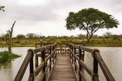 Houten Pier over Kenyan Lake Stock Afbeelding