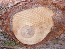 Houten pijnboom als achtergrond stock afbeeldingen