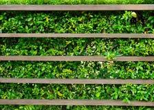Houten plank met groene bladeren Stock Foto