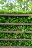 Houten plank met groene bladeren Stock Afbeelding