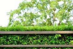 Houten plank met groene bladeren Stock Fotografie