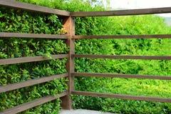 Houten plank met groene bladerenachtergrond Stock Foto's