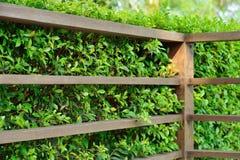 Houten plank met groene bladerenachtergrond Stock Afbeelding