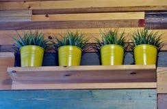 Houten plank op de muur met kleine installaties in gele potten stock afbeelding