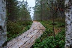 houten plankpromenade op moerasgebied in de herfst royalty-vrije stock fotografie