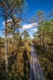houten plankpromenade op moerasgebied in de herfst royalty-vrije stock foto's