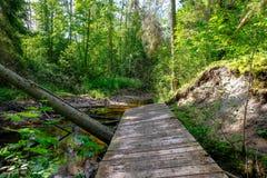 houten plankpromenade op moerasgebied in de herfst royalty-vrije stock foto