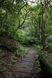 Houten plankweg in een weelderig en verdant bos Royalty-vrije Stock Fotografie