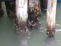 Houten polen en de gevolgen van water in Venetië Royalty-vrije Stock Foto