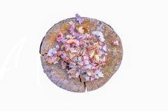Houten potloodspaanders en kleurrijke crumbs van grafiet van slijper op boomstomp Hoogste mening royalty-vrije stock fotografie