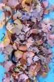 Houten potloodspaanders en kleurrijke crumbs van grafiet van slijper op zachte pastelkleurdocument achtergrond Hoogste mening Ont stock afbeeldingen