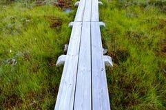 houten promenade in moeras Stock Fotografie