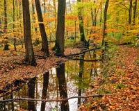 Houten rivier in de herfstbos Stock Foto
