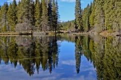 Houten Rivier in het Park van de Staat van Oregon stock foto's