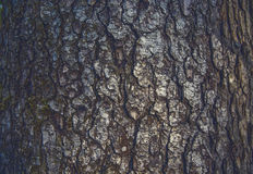 Houten schors De textuur van de schors Stock Afbeeldingen
