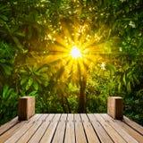 Houten skywalk in natuurlijke tuin Royalty-vrije Stock Foto's