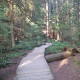 Houten sleep bergaf bij Capilano-Rivier Regionaal park stock foto