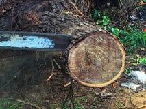 Houten snijder, blad, dalende regen stock afbeelding