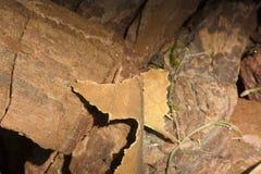 Houten spaander materiële, houten textuur, ruwe schors stock afbeelding