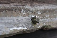 Houten spijker in hout Royalty-vrije Stock Afbeelding
