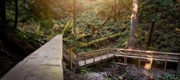 Houten stappen in een altijdgroen regenwoud royalty-vrije stock afbeeldingen