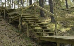 Houten stappen in het bos royalty-vrije stock fotografie