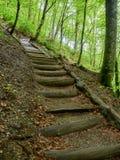 Houten stappen op de toeristensleep in de lente in het bos stock foto