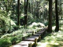 Houten steeg in het donkergroene bos van Alishan, Taiwan Royalty-vrije Stock Afbeeldingen