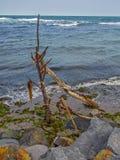 Houten stokken op het strand Stock Afbeeldingen