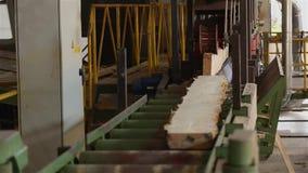 Houten straal op transportband, houtverwerking bij een houtbewerkingsfabriek, industrieel binnenland bij een zaagmolen stock footage