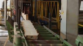 Houten straal op transportband, houtverwerking bij een houtbewerkingsfabriek, industrieel binnenland bij een zaagmolen stock video