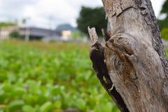Houten tak met planten-achtergrond stock afbeeldingen