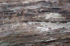 Houten Texturen op Felled Boom Stock Foto