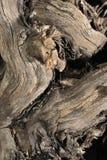 Houten textuur Stock Afbeeldingen