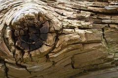 Houten textuur Stock Foto