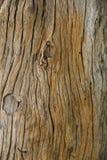 Houten Textuur abstracte achtergrond Stock Fotografie