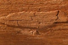Houten Textuur Als achtergrond Royalty-vrije Stock Afbeeldingen