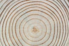 Houten Textuur De dwarspijnboom van de zaagbesnoeiing met jaarringenclose-up Stock Afbeeldingen