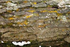 Houten textuur/de textuur van de boomhuid Royalty-vrije Stock Foto's