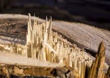 Houten Textuur De textuur van de boom is lichtbruin, gezaagd, strook Achtergrond royalty-vrije stock afbeeldingen