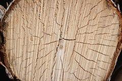 Houten Textuur Dwarsdoorsnede van de boom in detail stock foto