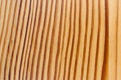 Houten Textuur, Gebogen Regelmatige Lijnen Stock Afbeeldingen