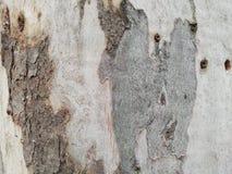 Houten textuur, korrelige textuur, houten texturen, aardtextuur, dicht, textuur, hout, abstrac Uitstekende lichte en donkere hout stock fotografie